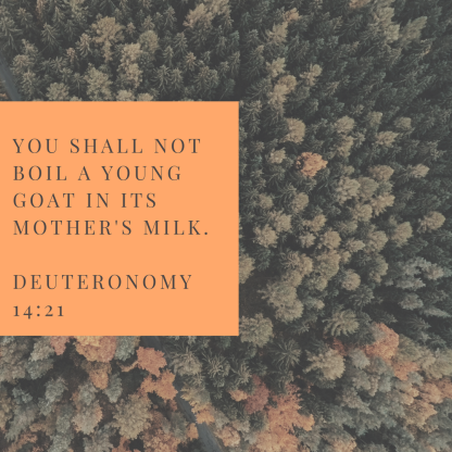 You shall not boil a young goat in its mother's milk. 
